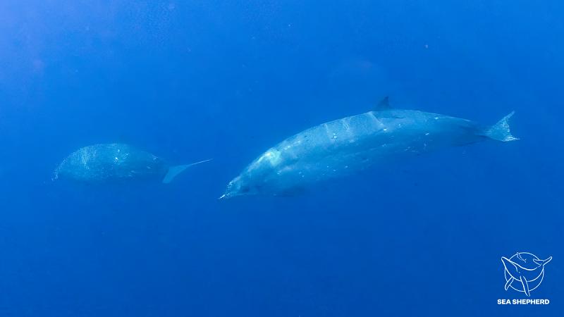 Cientistas acreditam ter descoberto uma nova espécie de baleia no México