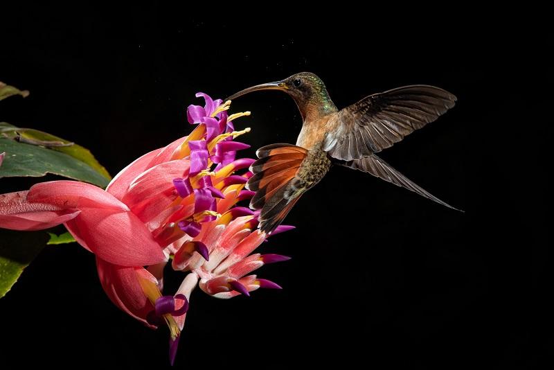 Conheça os cinco finalistas do 4o Concurso Conexão Planeta de Fotografia de Natureza!