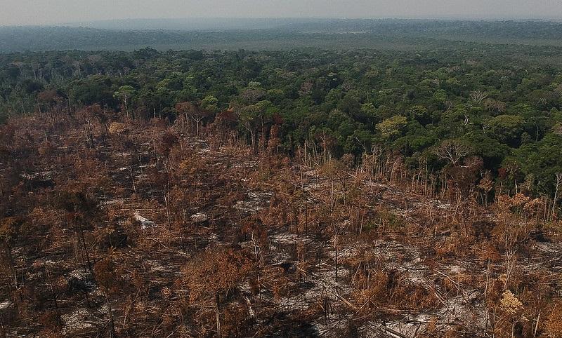 Devastação na Amazônia atinge a maior taxa em 12 anos