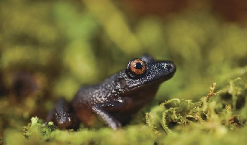 Vinte novas espécies desconhecidas da ciência são descobertas em expedição nos Andes bolivianos