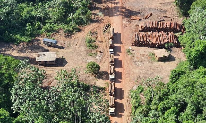 Na maior apreensão da história do Brasil, Polícia Federal confisca quase 44 mil toras de madeira nativa extraída ilegalmente