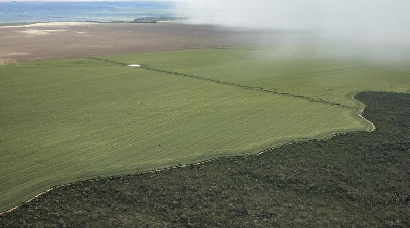 Senado aprova projeto que facilita venda de terras brasileiras a estrangeiros