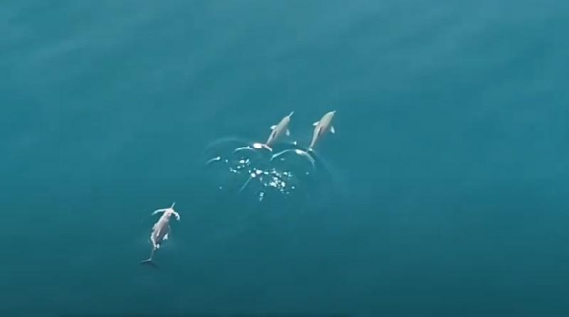 """Golfinho mais ameaçado do Atlântico Sul é avistado no litoral do RJ, em área de proteção que Bolsonaro queria transformar em """"nova Cancun"""""""