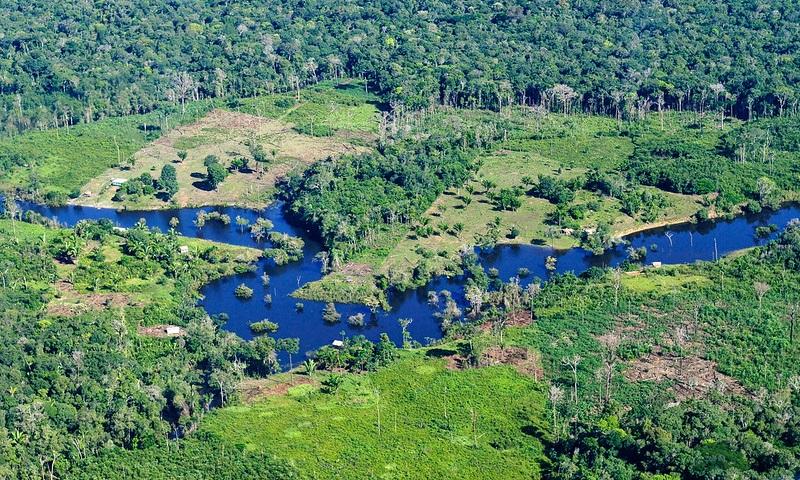 60% dos brasileiros defendem preservação das florestas como principal arma para combater crise climática, aponta novo estudo global