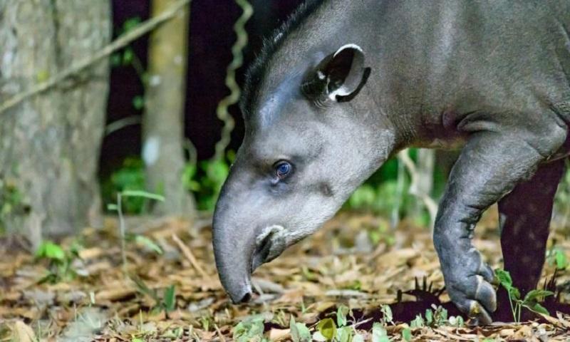 A ameaça aos grandes mamíferos do Cerrado