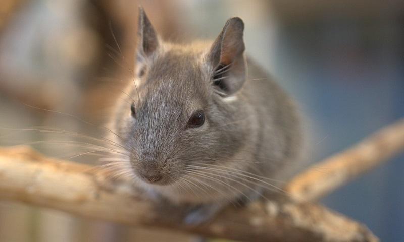 Campanha internacional pede fim do comércio de peles de animais e alerta sobre risco de uma nova pandemia