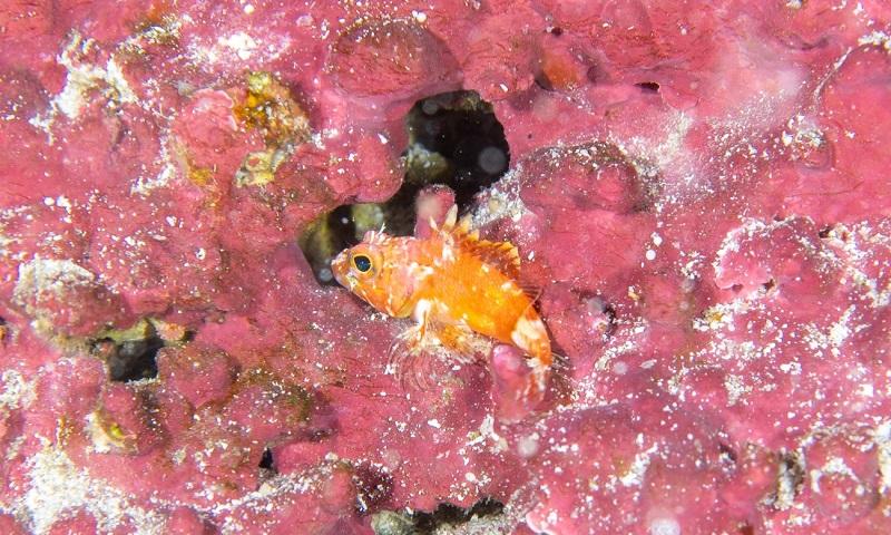 Em expedição, pesquisadores se deparam com espécies de peixes nunca antes registradas em Fernando de Noronha