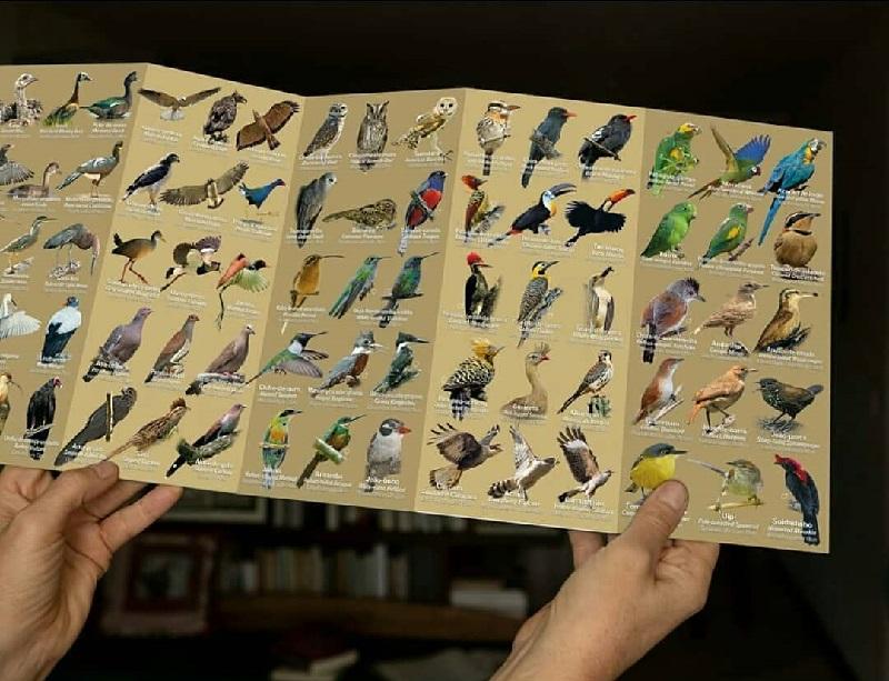 Guia de bolso mostra o incrível universo das aves na Chapada dos Veadeiros