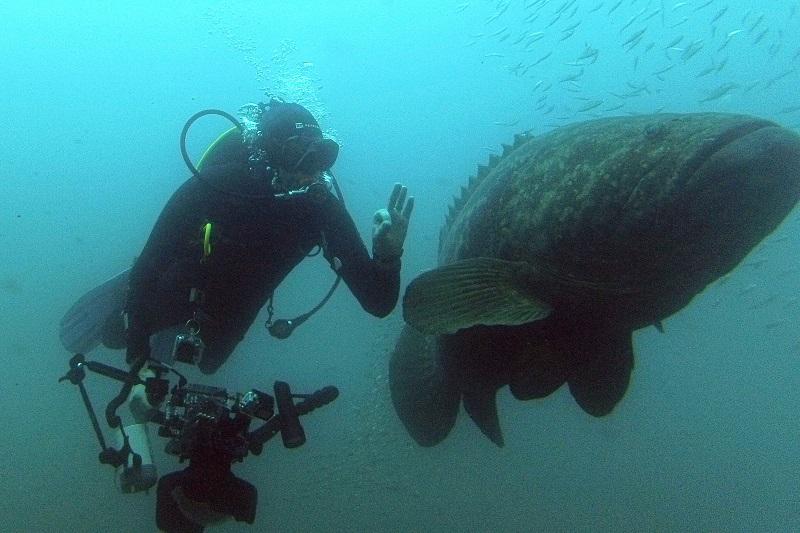 Um mergulho em meio a criaturas fantásticas e a natureza preservada do litoral do Paraná