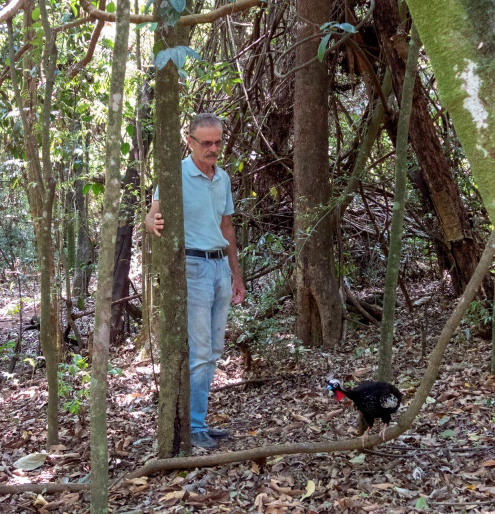 De quatro a 400: como a paixão de um brasileiro pelo mutum-do-sudeste conseguiu trazer esperança para a sobrevivência da espécie