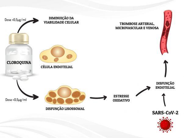 Cloroquina tem efeitos tóxicos sobre células vasculares, alerta estudo da UFPR