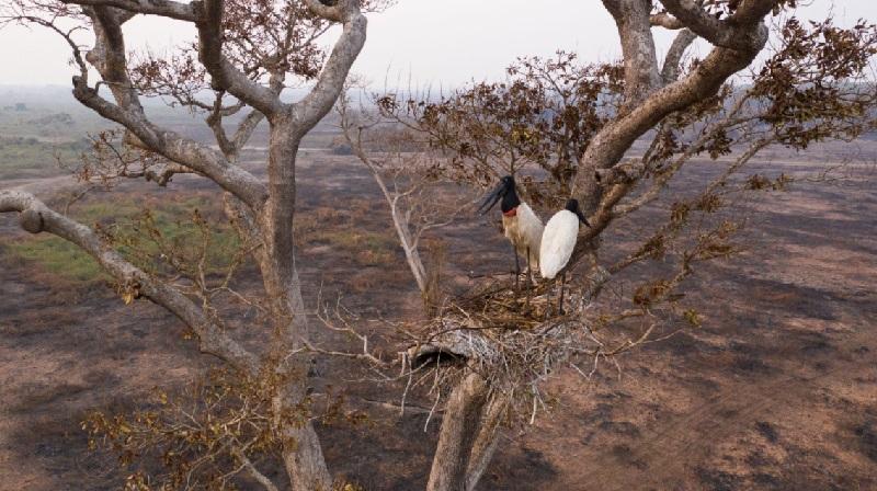 """Após pior seca em 50 anos, cientistas alertam para fim do Pantanal """"como o conhecemos"""""""