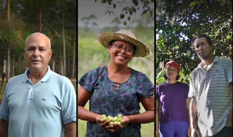 Websérie conta histórias de sucesso de restauração florestal feita por brasileiros