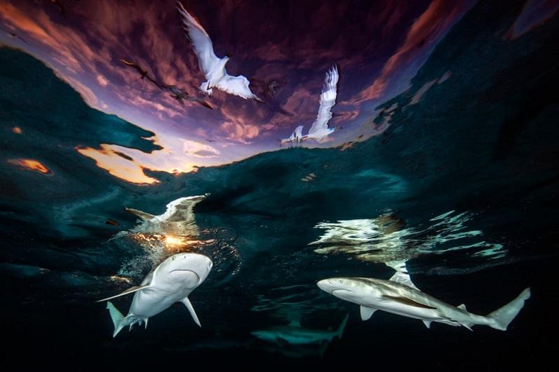 Estranhas e belas criaturas são destaque nas imagens vencedoras do Underwater Photographer of the Year