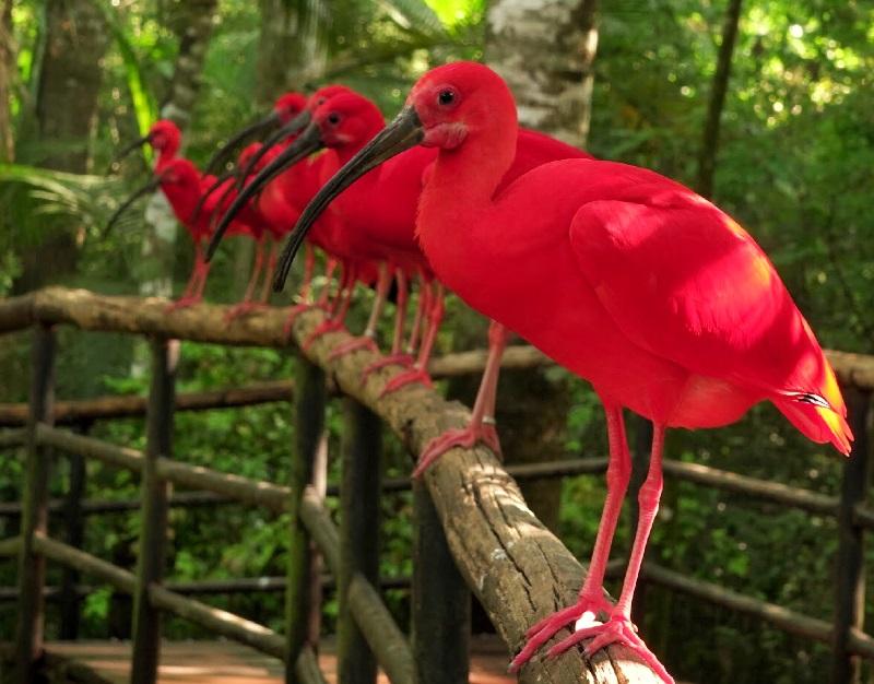 """Brasil ganha """"Centro de Sobrevivência de Espécies"""", polo de conservação para aves da Mata Atlântica em risco de extinção"""