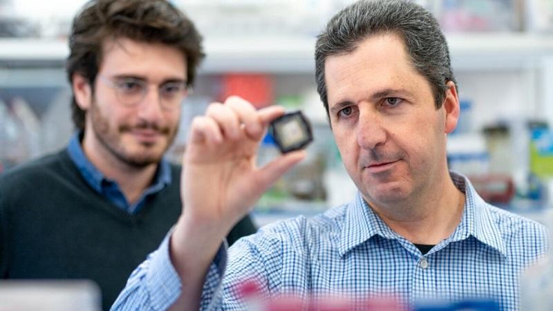 Cientistas israelenses criam medicamento para tratamento de câncer sem usar animais em testes