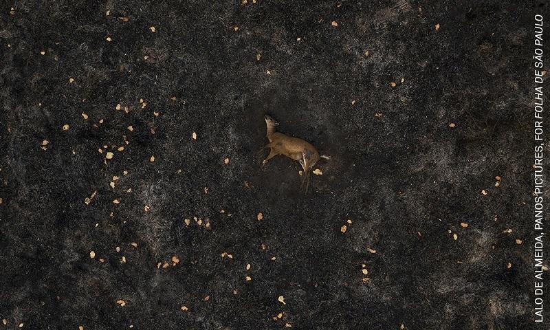 Fotógrafo brasileiro está entre finalistas do World Press Photo com imagens da tragédia dos incêndios no Pantanal