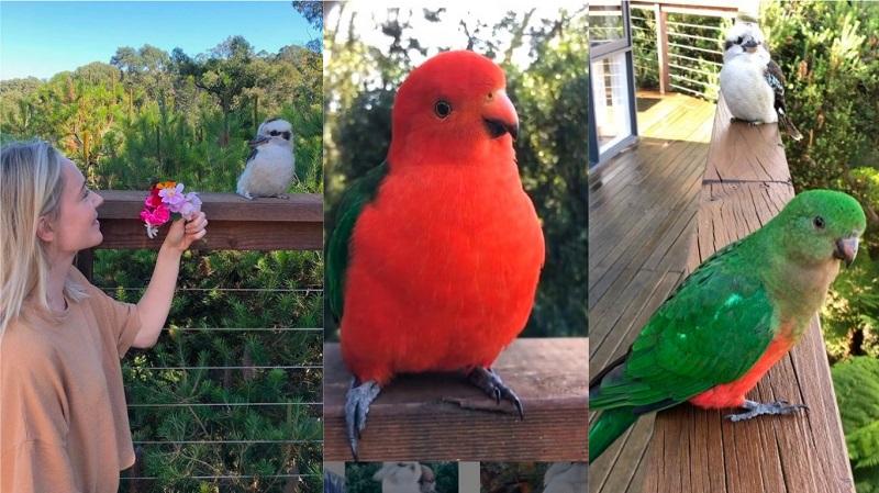"""Com vídeos de seus """"visitantes"""" na varanda, australiana conquista e encanta milhões de fãs no TikTok"""