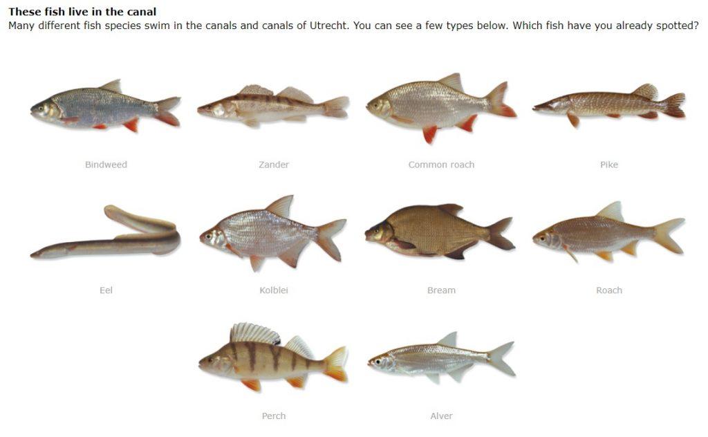 Peixes ganham ajuda de moradores e campainha virtual para cruzar canais de cidade na Holanda