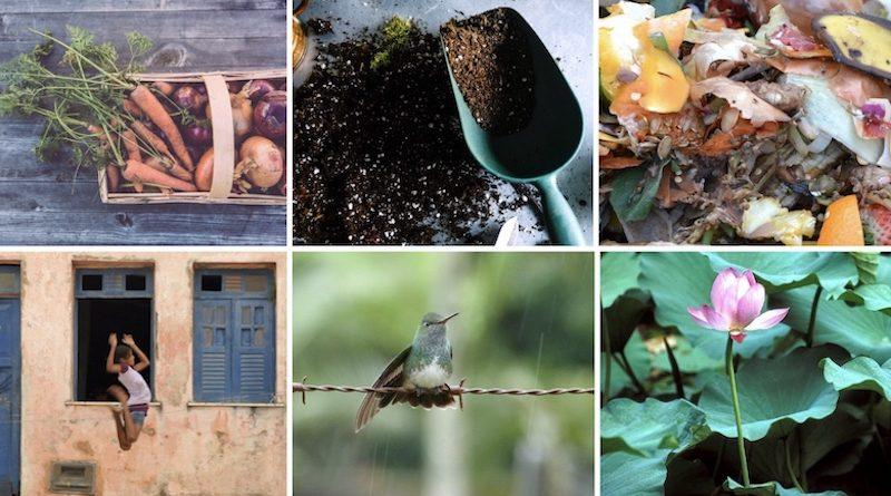 Seis passos para ampliar a relação com a natureza dentro de casa