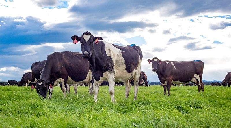 Nova Zelândia proíbe exportação de animais vivos em navios