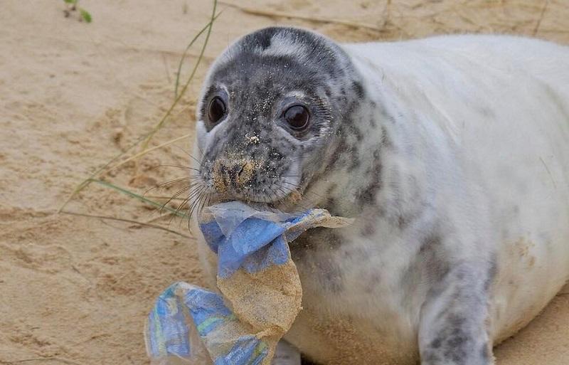 Agora plástico é considerado resíduo tóxico no Canadá