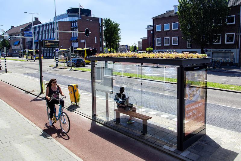 Cidade holandesa transforma pontos de ônibus em santuários para as abelhas