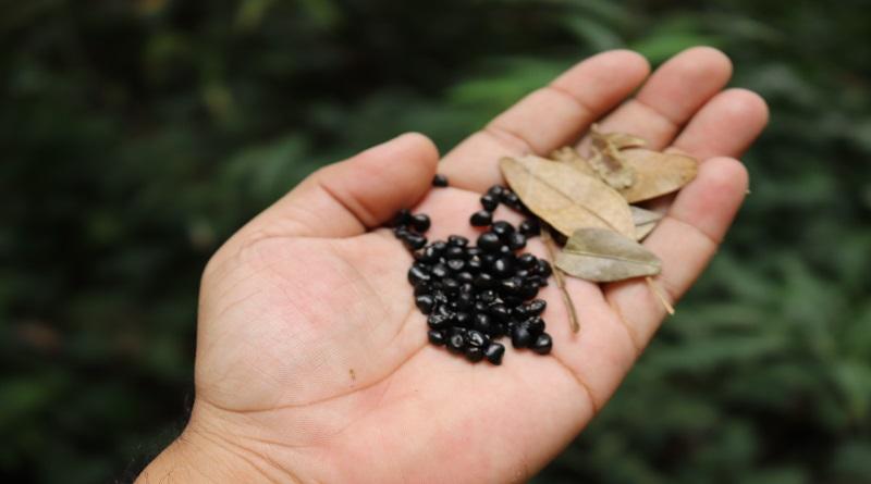 Cooperativa conserva a Amazônia coletando folhas e sementes que cuidam das pessoas e da floresta