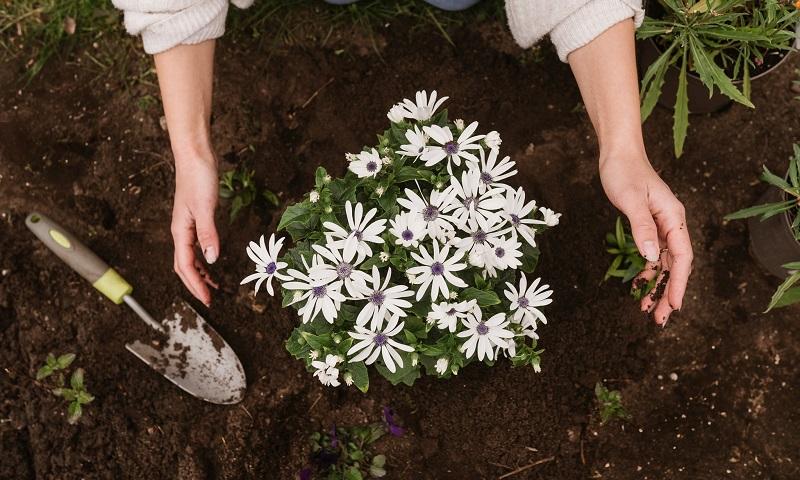 Uma 'dose' de jardinagem duas vezes por semana reduz o estresse e melhora o bem-estar, revela estudo britânico
