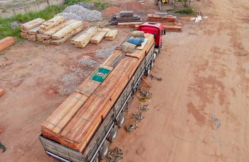 Polícia Ambiental do Amazonas faz a maior apreensão de madeira ilegal do ano: cerca de 600 mil m3