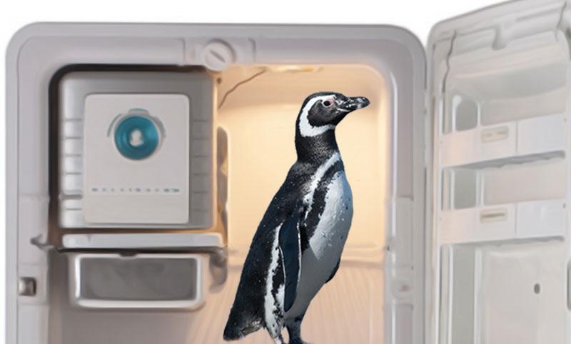 Geladeira não é lugar pra pinguim!
