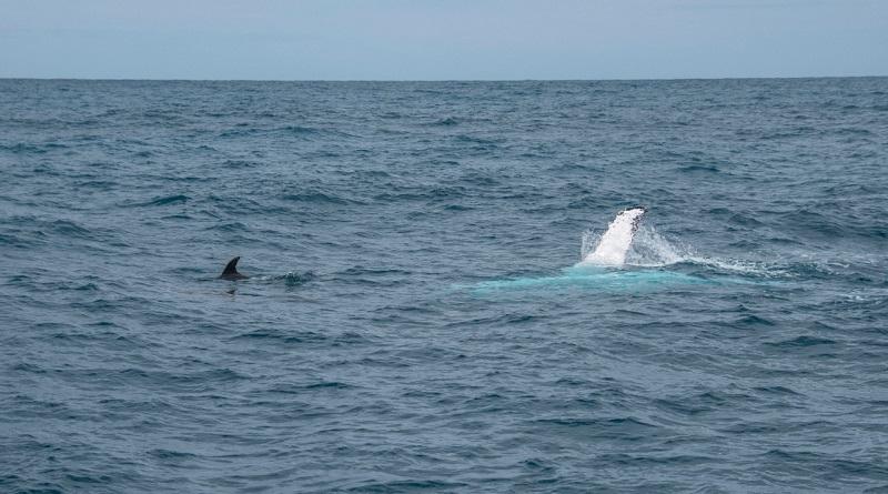 O dia em que baleias e golfinhos me deixaram preso em alto-mar