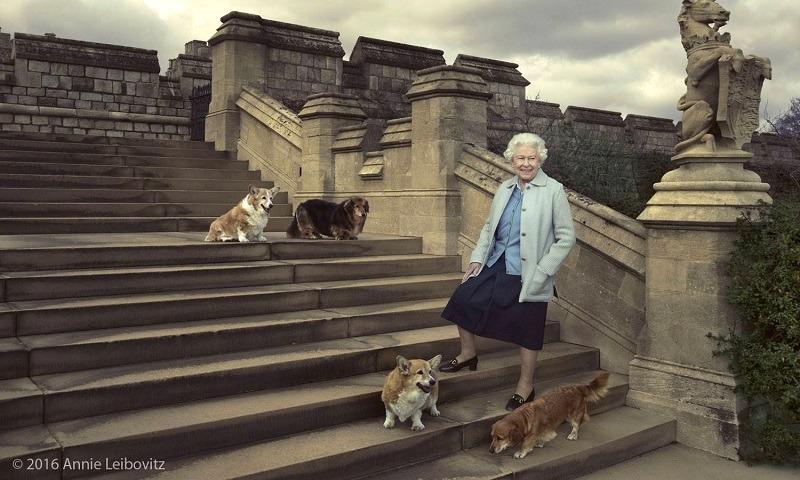 Em discurso no Parlamento, Rainha Elizabeth apresenta novas leis pelo bem-estar dos animais