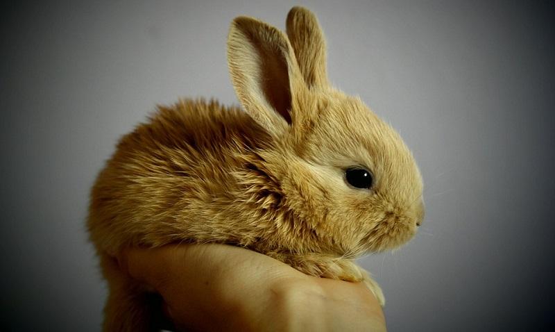 STF valida lei do Rio de Janeiro que proíbe testes em animais pelas indústrias de higiene pessoal e limpeza