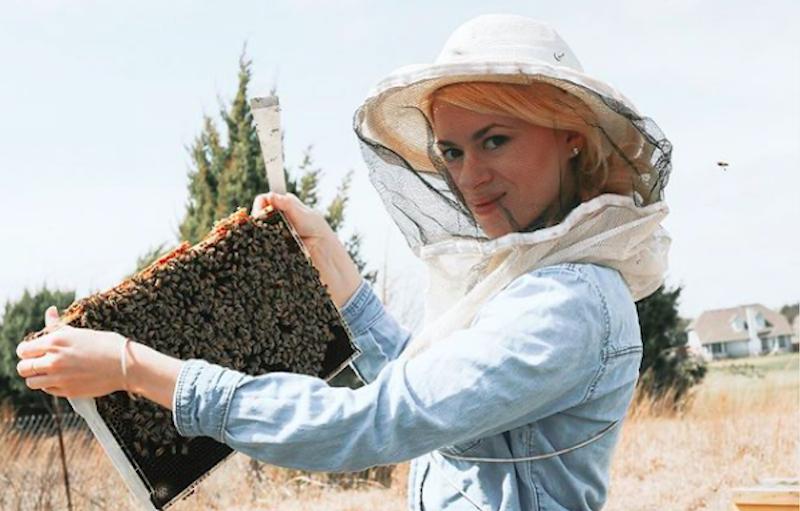 Apicultora salva abelhas do extermínio em Austin, EUA, grava a façanha e vídeo viraliza no TikTok