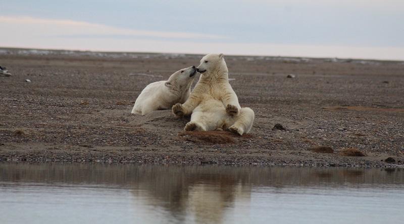 Biden reverte planos da era Trump de exploração de gás e petróleo em em reserva de vida selvagem no Ártico