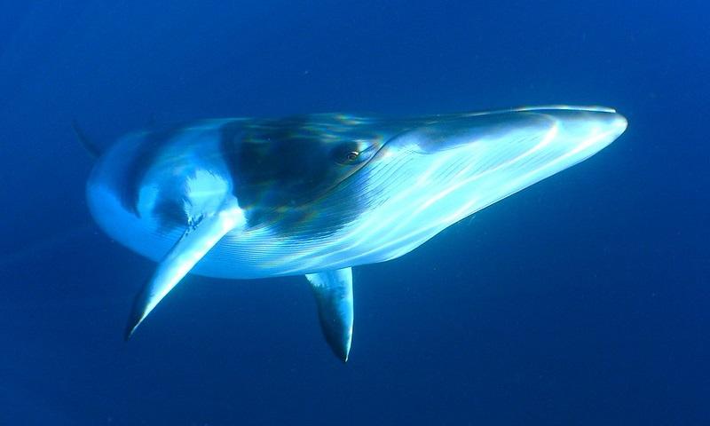 Experimento científico com baleias na Noruega gera protestos e denúncia de crueldade contra animais