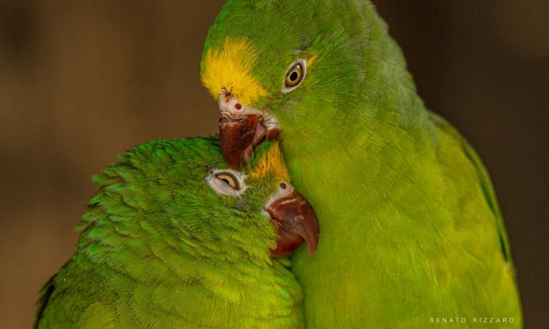 Para esse Dia dos Namorados, Carlos Drummond de Andrade e o galanteio das aves