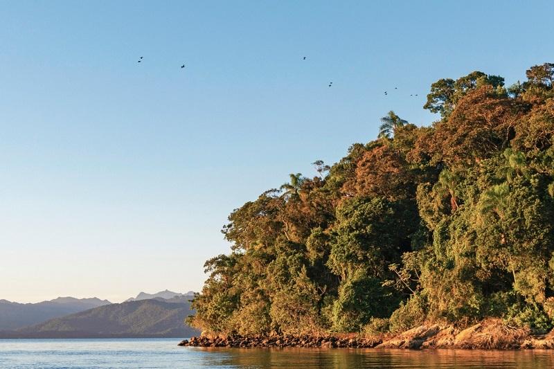 Time paranaense se engaja na luta pela preservação do do maior remanescente contínuo de Mata Atlântica no país