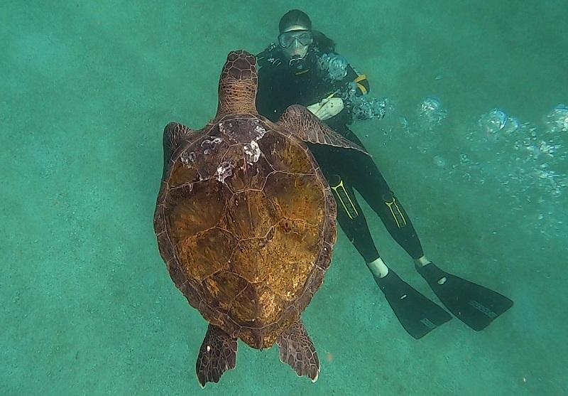 Biólogos celebram localização de novo habitat de tartarugas-verdes no Rio de Janeiro