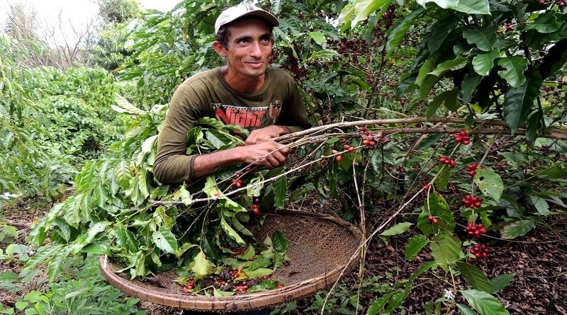 De Apuí, no sul do Amazonas, vem o primeiro café sustentável da Amazônia brasileira