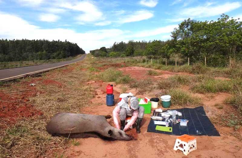 Antas do Cerrado, no Mato Grosso do Sul, estão sendo contaminadas por agrotóxicos, denunciam pesquisadores