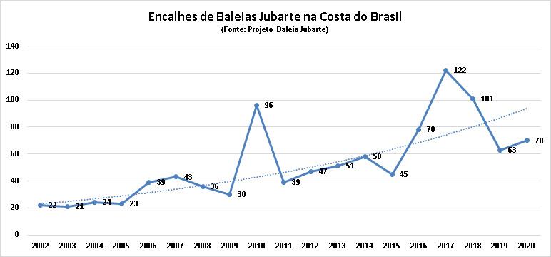 Baleia enrolada em redes de pesca aparece morta em Santa Catarina, elevando número de casos para dez desde o começo do ano