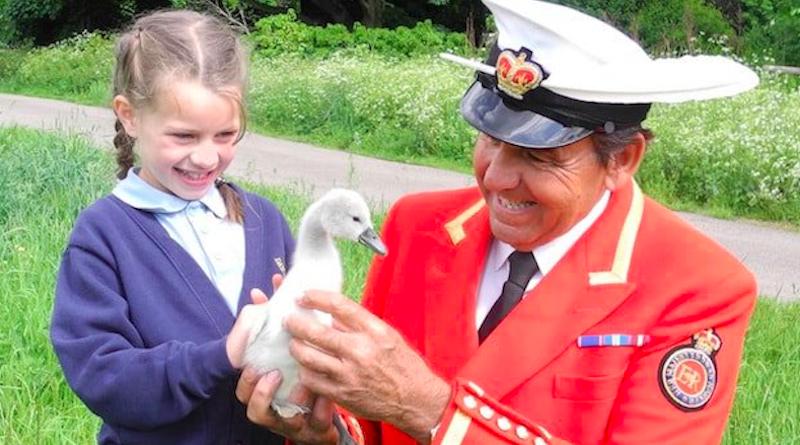 Censo anual dos cisnes da Rainha Elizabeth volta a ser realizado e enfatiza a preservação da espécie e a educação ambiental