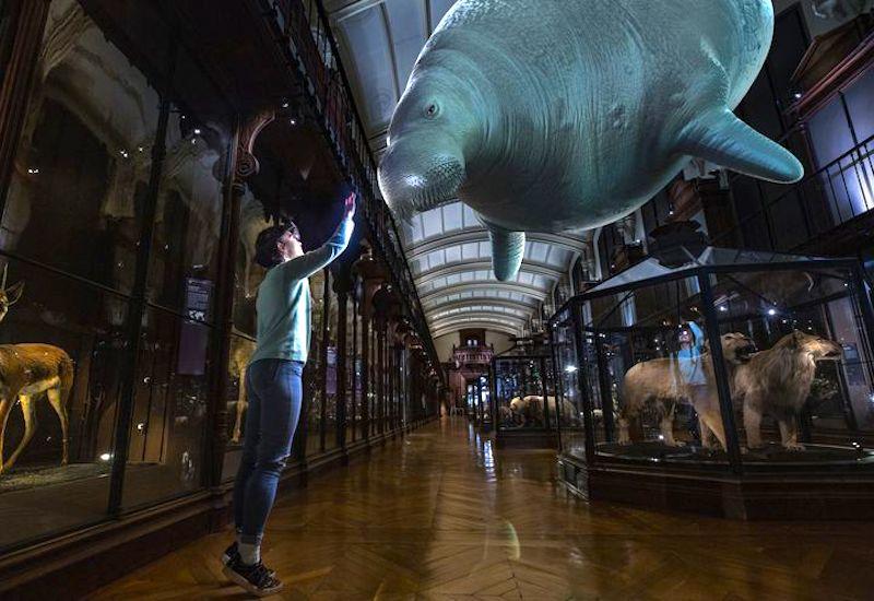 Museu de História Natural de Paris 'ressuscita' 11 espécies de animais extintos com a técnica de realidade aumentada