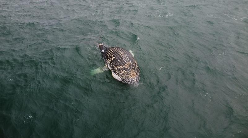 Polícia ambiental de Santa Catarina é cobrada sobre fiscalização de redes de pescas ilegais após a morte de diversas baleias emalhadas