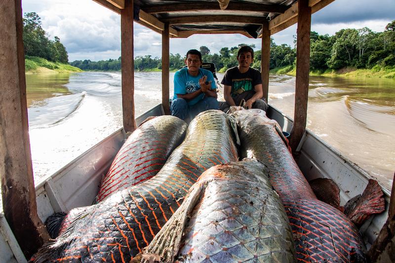 Em um ano, a premiada rede Origens Brasil, da Amazônia, cresce 69% e movimenta mais de R$ 2,3 milhões em produtos da floresta
