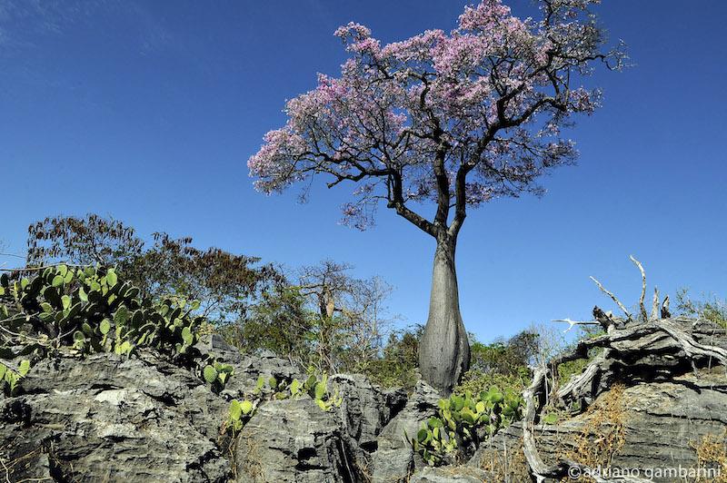Caatinga: rica de gente, de natureza e de poesia