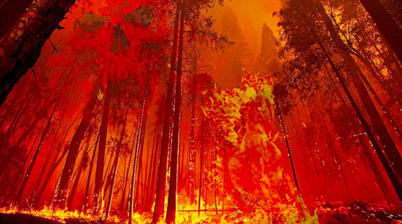 30% das árvores do mundo estão em risco de extinção: Brasil é o segundo país com o maior número de espécies ameaçadas