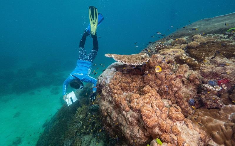 Coral gigante, com mais de 400 anos, é descoberto na Grande Barreira de Corais, na Austrália